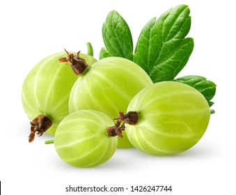 Isolatec gooseberries. Bunch of green gooseberries isolated on white background with clipping path