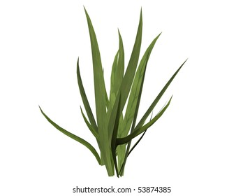 Isolated 3D Illustration of some grass