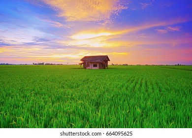 Isolated abandoned house in a paddy field with a panoramic view.