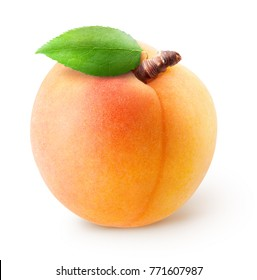 Isolated apricot.  Whole single apricot fruit with leaf isolated on white background with clipping path