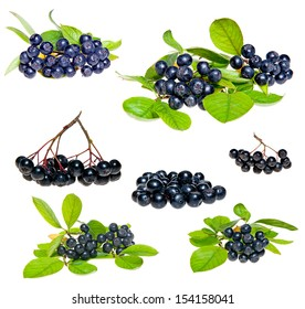 Isolated Aronia - Black Choke berry fruits. Separated pile of fruit, twig with leaves, and bunch.