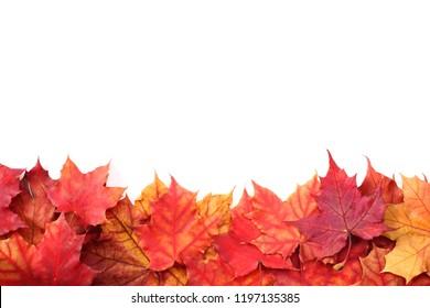 autumn leaves stock photo edit now 116169799 shutterstock