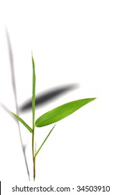 Isolated bamboo leaf reflects it shadow