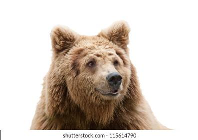 isolated bear head