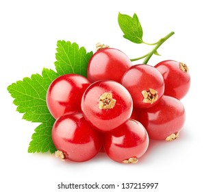 Isolated berries. Red currant fruits isolated on white background