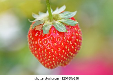 Isolated big strawberry on a colourful background