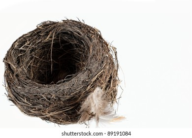 Isolated Bird's Nest with Feather