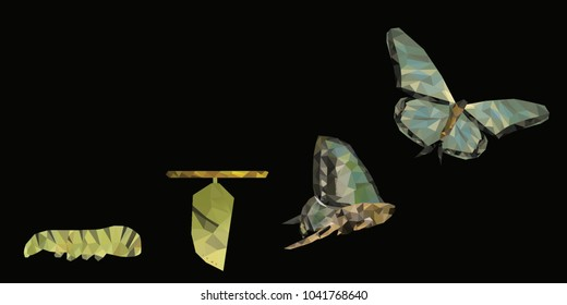 Isolated black background of beautiful natural green abstract low poly butterfly life cycle, represent successful growth, bright future and transformation concept. With empty copy space background.