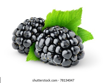 Isolated blackberries. Two blackberry fruits with leaf isolated on white background