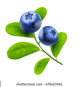 Isolated blueberries. Two blueberry fruits on a branch with leaves isolated on white background with clipping path