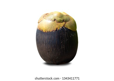 isolated of Borassus flabellifer other name doub , palmyra , tala , toddy palm or ice apple is on white background with clipping path . has sweet sugar taste can cooking dessert .