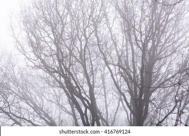 Isolated branches over white sky. Black bare tree branches on white frozen sky in wintertime.