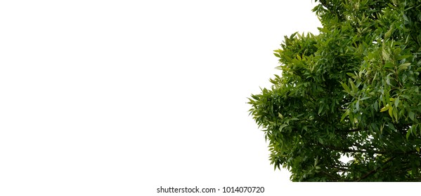 Isolated branches of tree on white for background