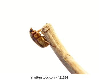 isolated bug#2