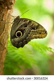 isolated butterfly on tree