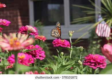 Isolated butterfly sitting on a flower