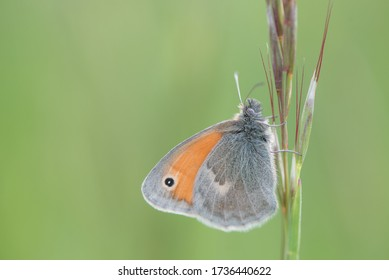 Isolated butterfly sitting on a grass