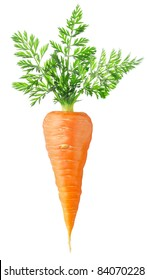Isolated carrot. One fresh carrot with big leaves isolated on white background