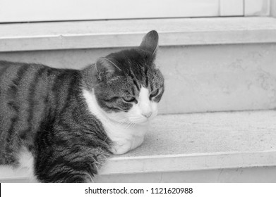 Isolated cat on the stairs (Pesaro, Italy)