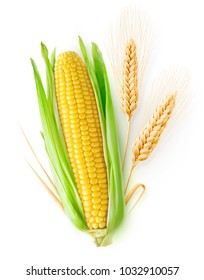 Isolated cereals. One ear of corn and two ears of wheat with leaves isolated on white background with clipping path