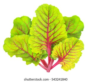 Isolated chard. Fresh leaves of chard (mangold) isolated on white background with clipping path