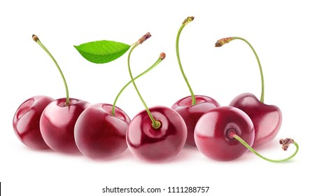 Isolated cherries. Seven sweet cherry fruits with long stems in a row isolated on white background with clipping path