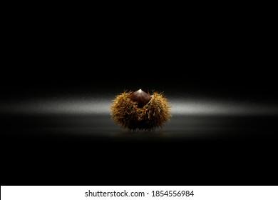 castaño aislado con cáscara en fondo de etiqueta negra