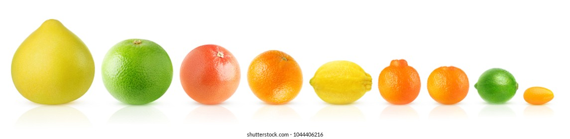 Isolated citrus fruits in a row. Pomelo, white and pink grapefruits, orange, lemon, clementine, tangerine, lime and kumquat isolated on white background with clipping path