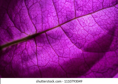 Isolated close up of a purple flower