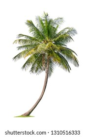 Isolated coconut tree on white background Low-cost coconut trees are the economic crops of Thailand, which the Thai people call coconut perfume.