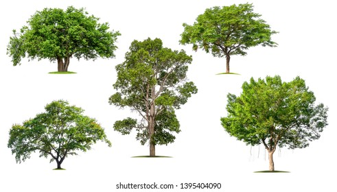isolated collection big tree on white background