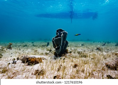 An isolated colony of tube coral rises from sand with shadow of boat and divers above in background