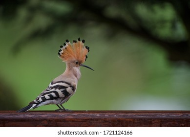 Isolated colorful bird perching on a branch