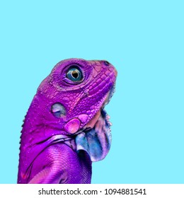Isolated colorful lizard, chameleon photography