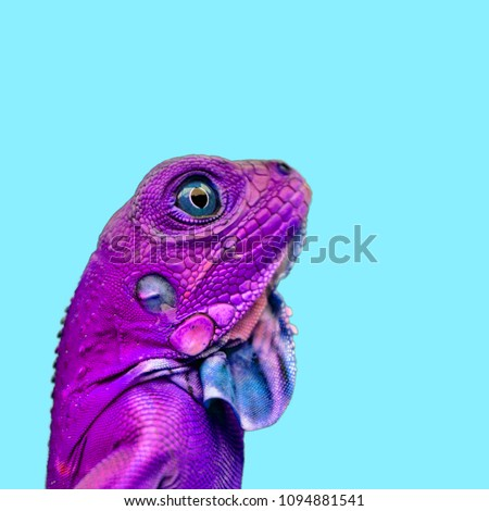 Isolated colorful lizard chameleon