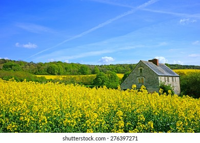 An isolated Cotswold country farm house surrounded by fields of Oil seed rape in spring near Painswick, The Cotswolds, Gloucestershire, United Kingdom