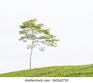isolated deciduous tree on a white background.
