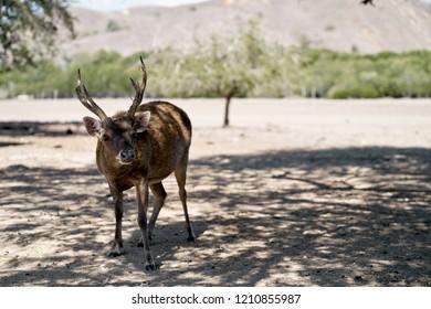 Isolated deer in bush