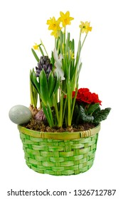 Isolated easter decoration with spring flowers in a green basket