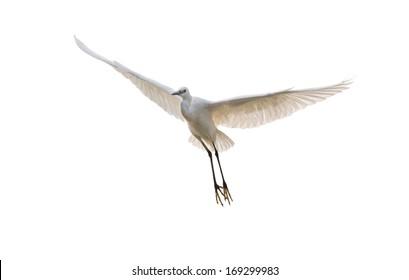 isolated egret