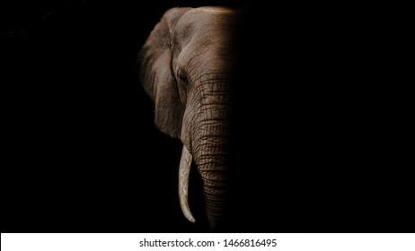 1000 3d Elephant Wallpaper Stock Images Photos Vectors