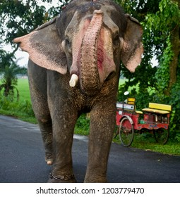 Isolated elephant on a street unique photo