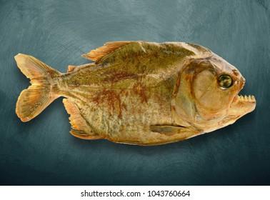 isolated embalmed piranha on dark background