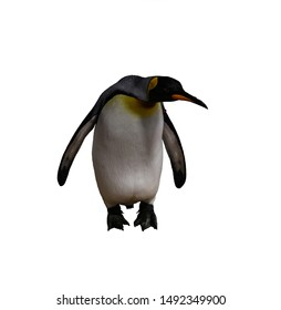 Isolated emperor penguin is bent over facing the camera