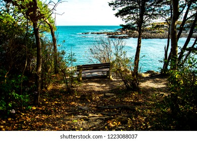 An Isolated empty bench surrounded by trees overlooks the Atlantic Ocean along the Marginal Way Path in Ogunquit Maine.