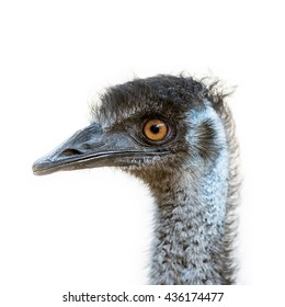 isolated Emu head
