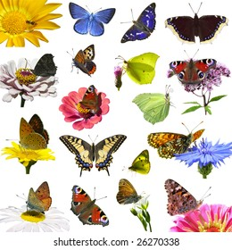 isolated european butterflies on spring flowers