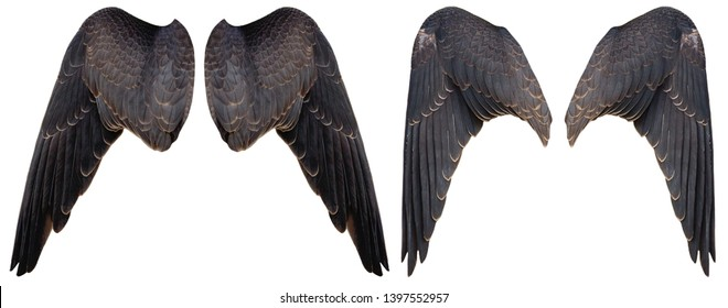 Isolated  - Falcon wings (Falco sparverius)