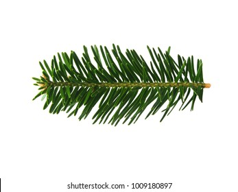 Isolated fir tree branch. One fresh fir tree branch isolated on white background.