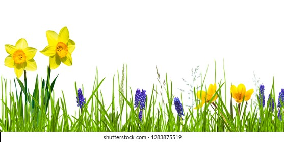 isolated flower bed in springtime on white